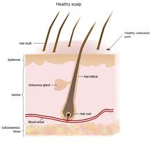 DHT Hormone and Hair Loss
